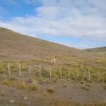 Chileniische patagonien 2