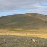 Chilenische patagonien 1