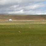 Shaftszucht in patagonien